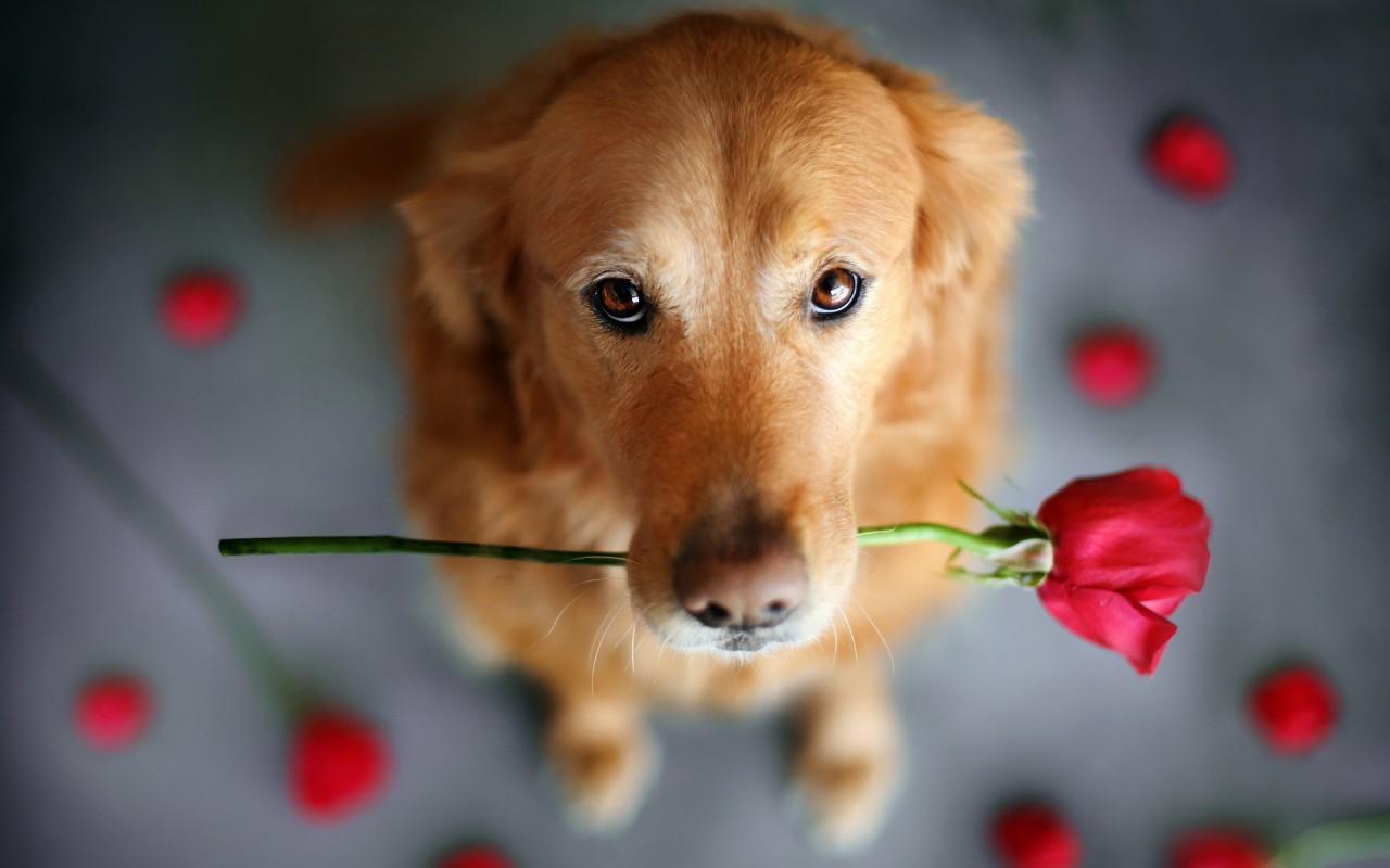 把最流行的可爱狗狗壁纸推荐给